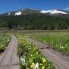 尾瀬国立公園 山開きしました。5月21日