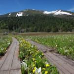 夏が来れば思い出す~尾瀬国立公園、水芭蕉の見頃。